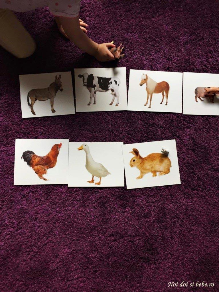 carduri cu animale